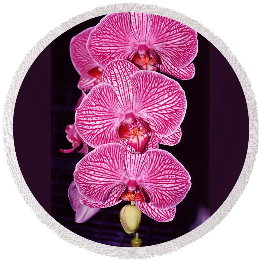 Photography Round Beach Towel featuring the photograph Pink Orchids by Susanne Van Hulst