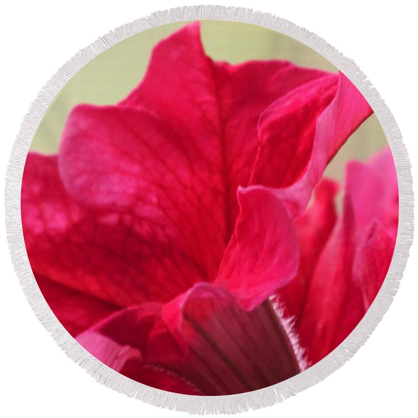 Pink Round Beach Towel featuring the photograph Pink Passion Petunia by Tammy Garner