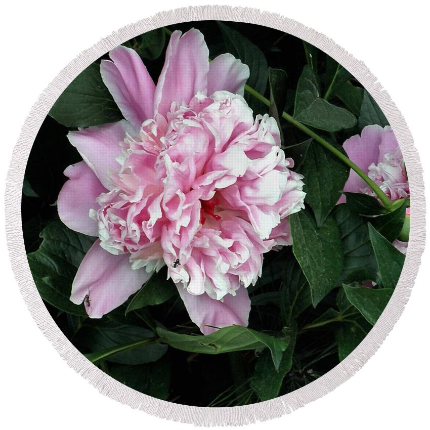 Peony Round Beach Towel featuring the photograph Pink Peone by T Cook