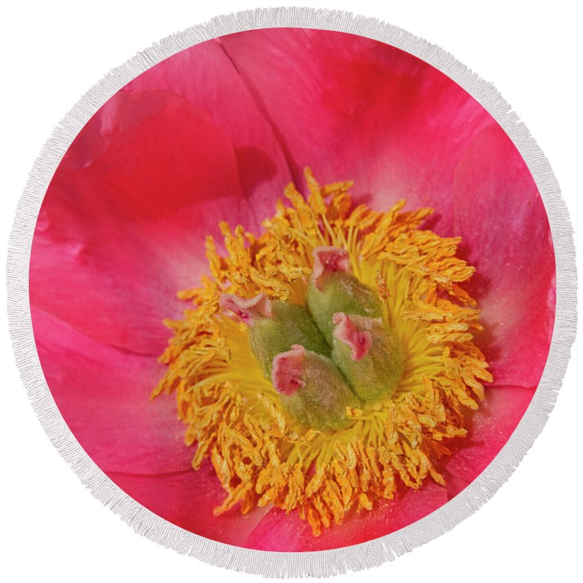 Pink Round Beach Towel featuring the photograph Pink Peony Flower Fine Art by James BO Insogna