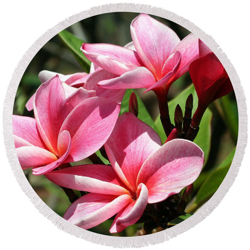 Flower Round Beach Towel featuring the photograph Pink Plumeria by Teresa Zieba