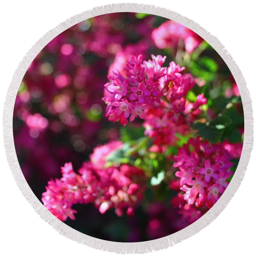 Flowering Currant Round Beach Towel featuring the photograph Pink Profusion 1 by Mo Barton