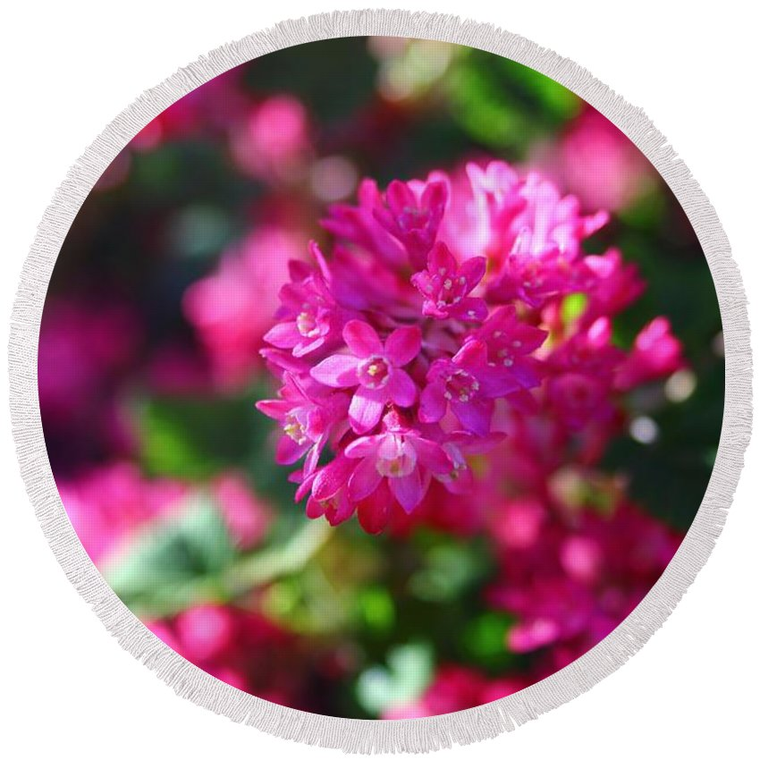 Flowering Currant Round Beach Towel featuring the photograph Pink Profusion 2 by Mo Barton