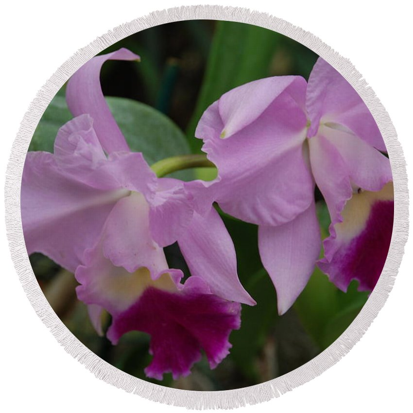 Macro Round Beach Towel featuring the photograph Pink Purple Orchids by Rob Hans