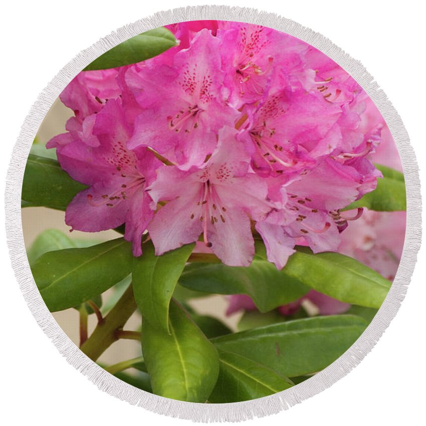 Pink Round Beach Towel featuring the photograph Pink Rhododendron by Jim And Emily Bush