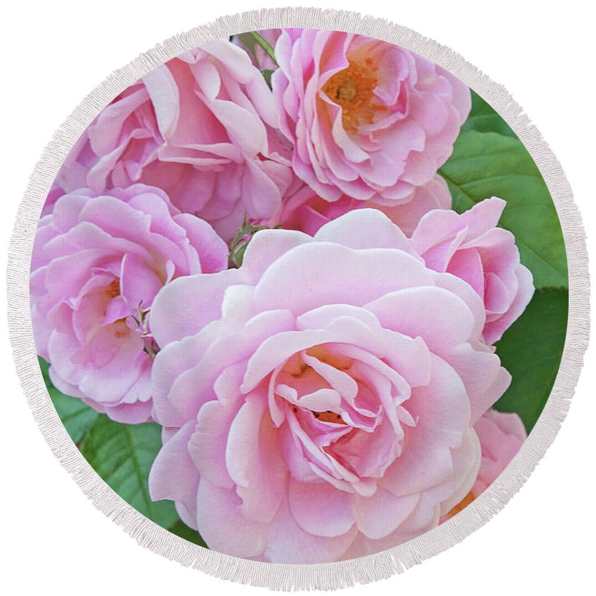 Pink Roses Round Beach Towel featuring the photograph Pink Rose Cluster II by Regina Geoghan