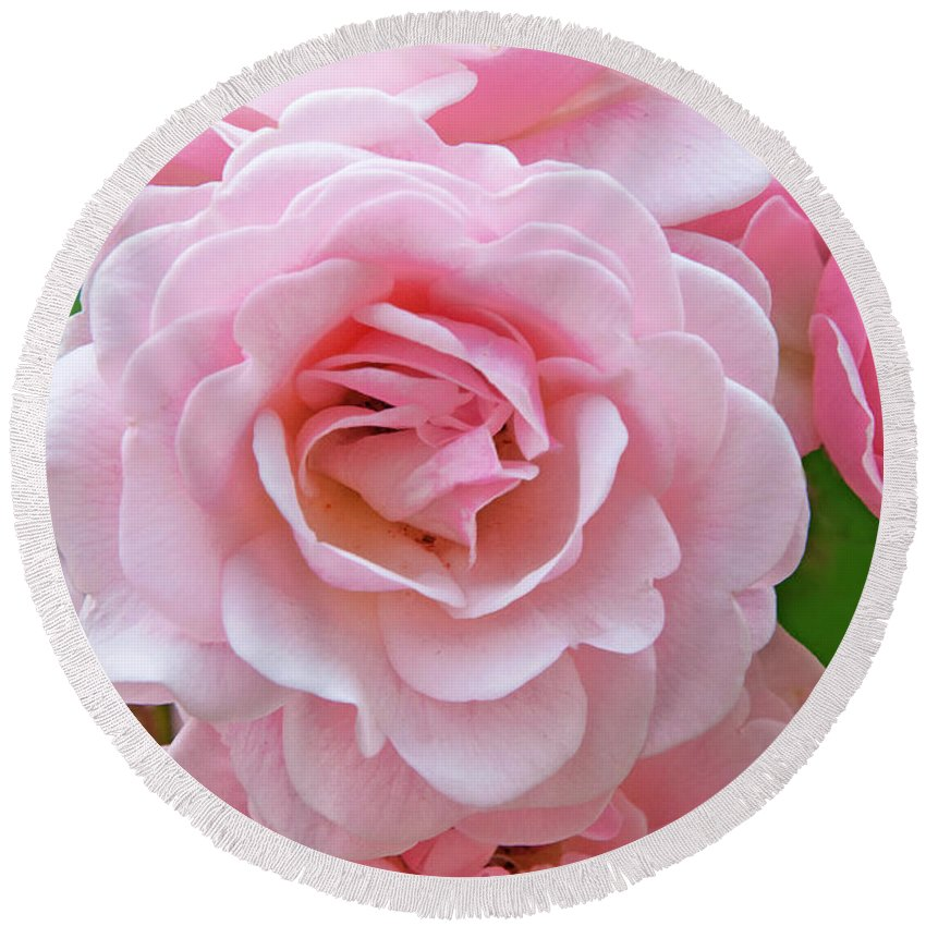 Pink Roses Round Beach Towel featuring the photograph Pink Rose Cluster IIi by Regina Geoghan