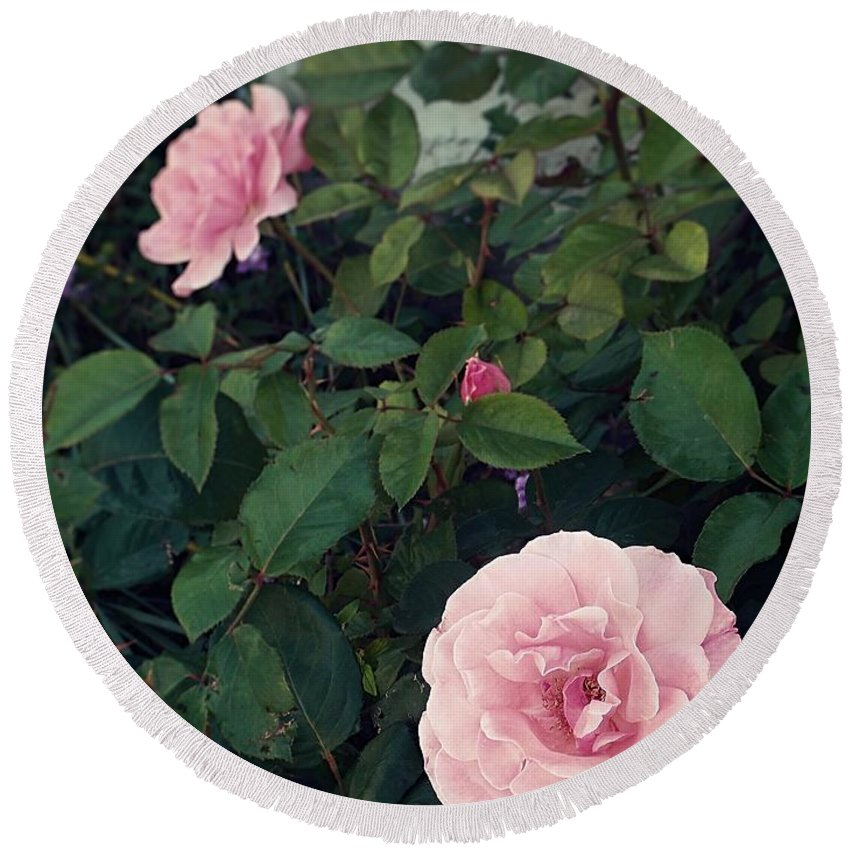 Three Pink Roses Bud Round Beach Towel featuring the photograph Pink Rose by Thomas Dudas