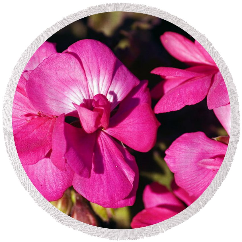 Clay Round Beach Towel featuring the photograph Pink Spring Florals by Clayton Bruster