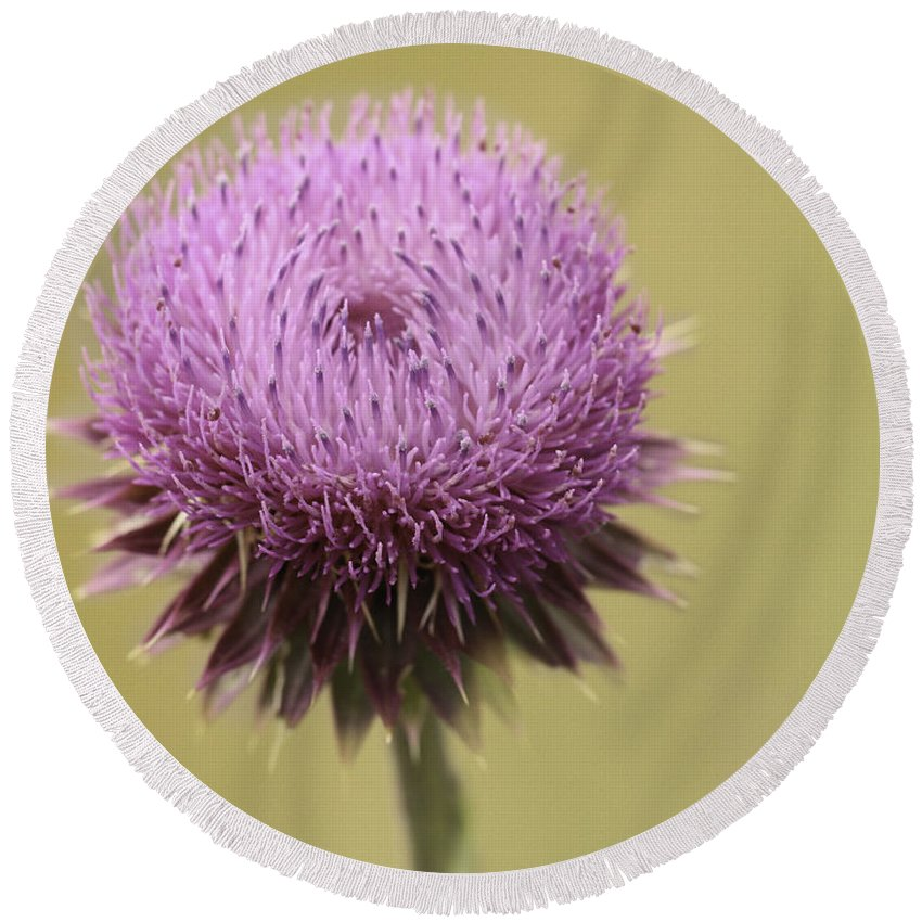 Thistle Round Beach Towel featuring the photograph Pink Thistle by Lorraine Baum