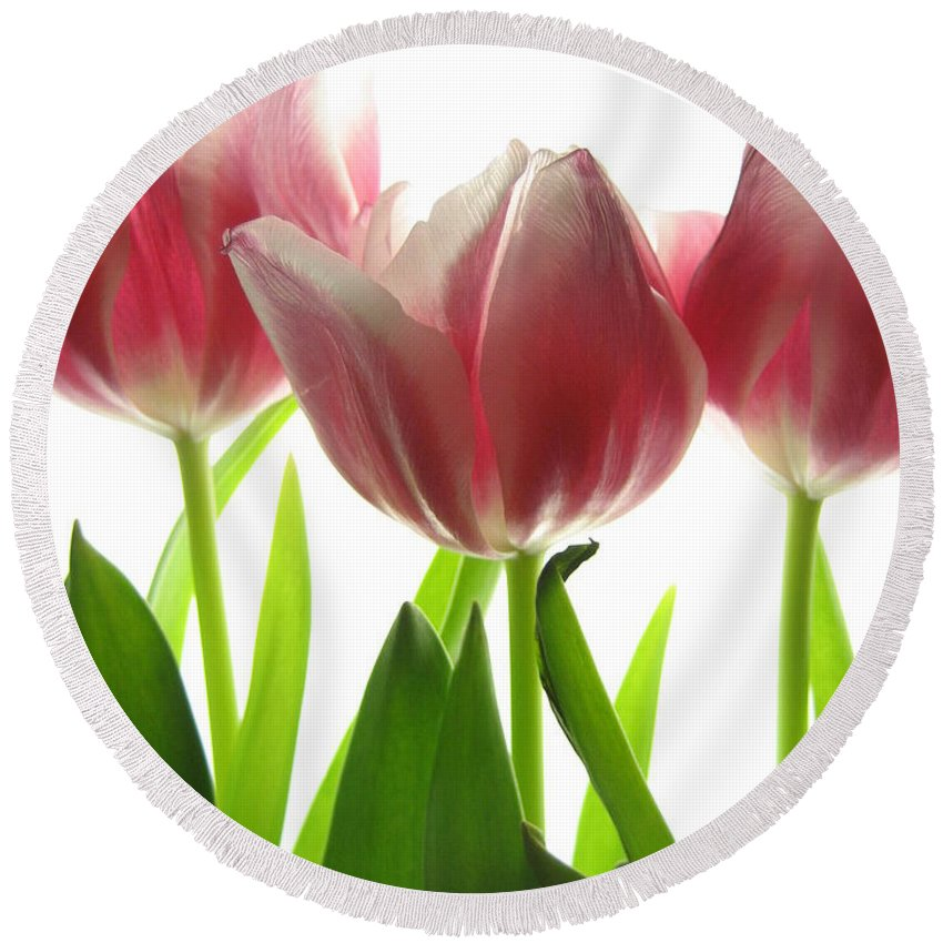 Tulip Round Beach Towel featuring the photograph Pink Tulips by Jane Linders