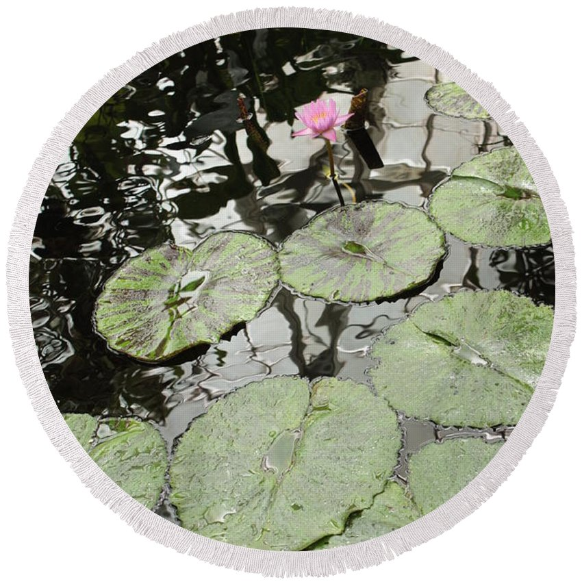 Ond Round Beach Towel featuring the photograph Pink Water Lily by Carol Groenen