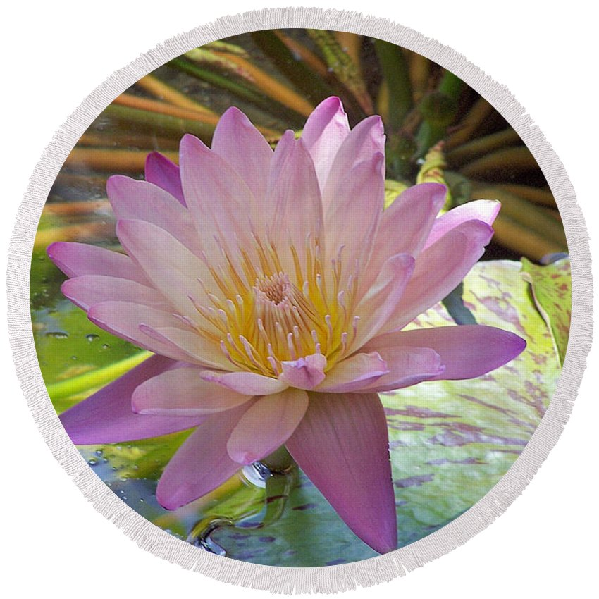 Flower Round Beach Towel featuring the photograph Pink Water Lily by Rogers