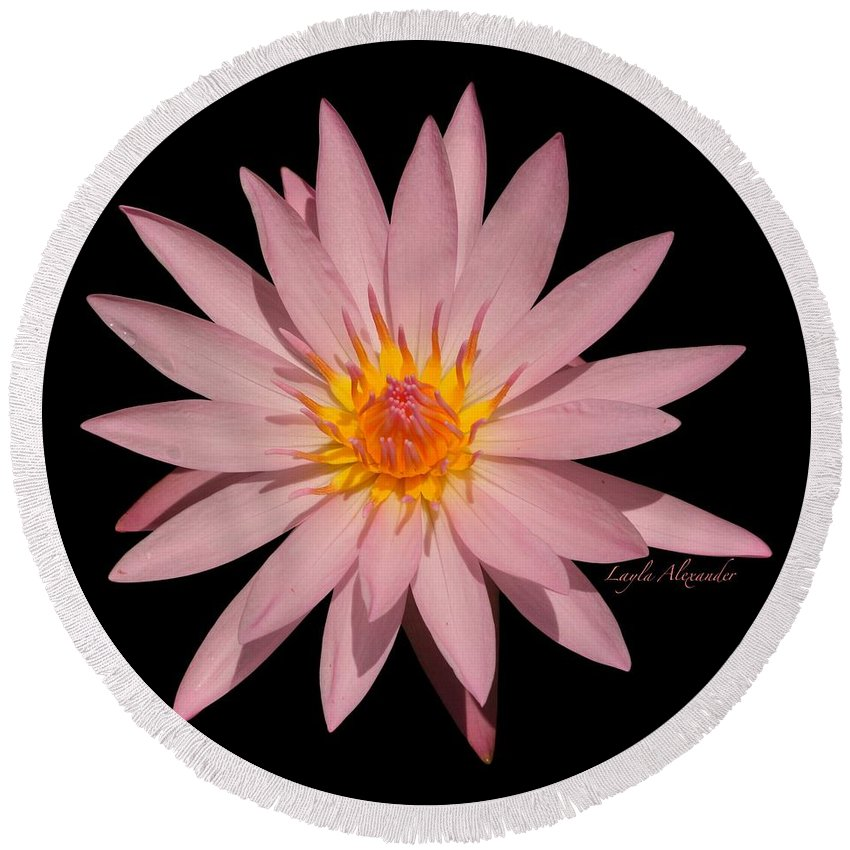 Layla Alexander Round Beach Towel featuring the photograph Pink Water Lily Transparent by Layla Alexander