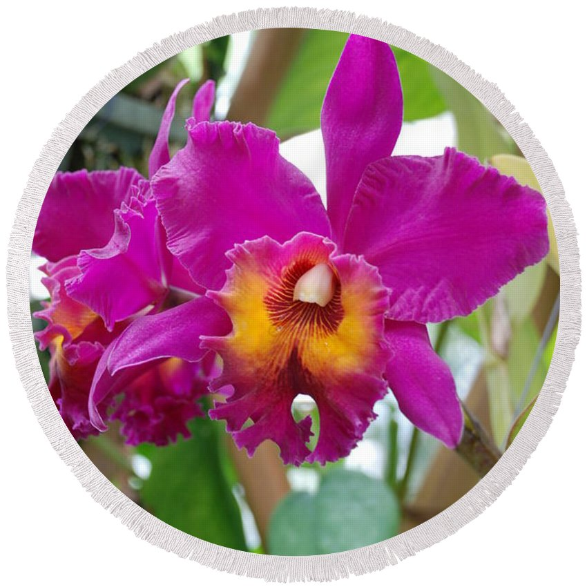 Macro Round Beach Towel featuring the photograph Pinkishyellow Orchid by Rob Hans