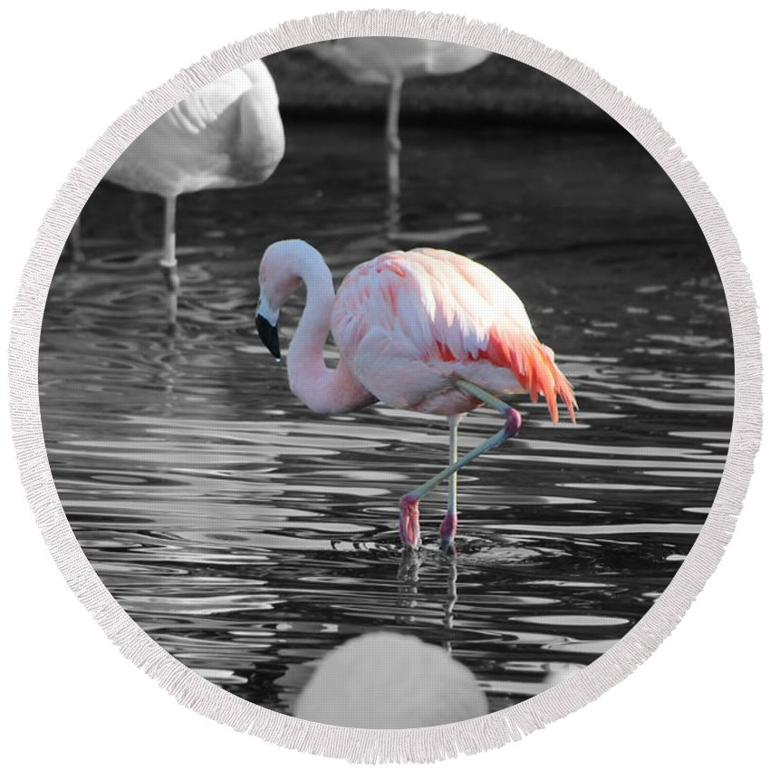 Palm Desert California Round Beach Towel featuring the photograph Pinky by Colleen Cornelius