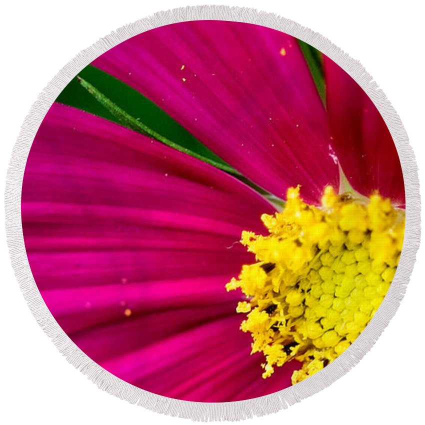Plink Round Beach Towel featuring the photograph Plink Flower Closeup by Michael Bessler
