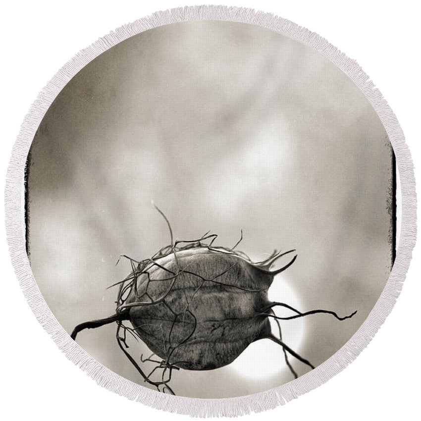 Pod Round Beach Towel featuring the photograph  Love In A Mist by Robert Brown