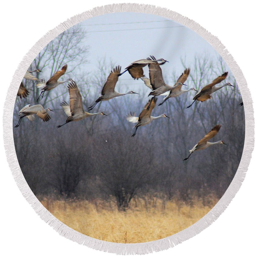 Sandhill Cranes Round Beach Towel featuring the photograph Poetry In Motion by Viviana Nadowski