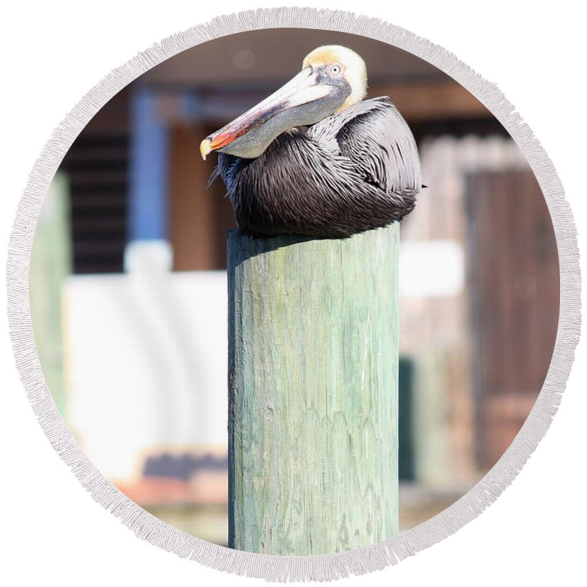 Wildlife Round Beach Towel featuring the photograph Pole Top Pelican by Carol Groenen