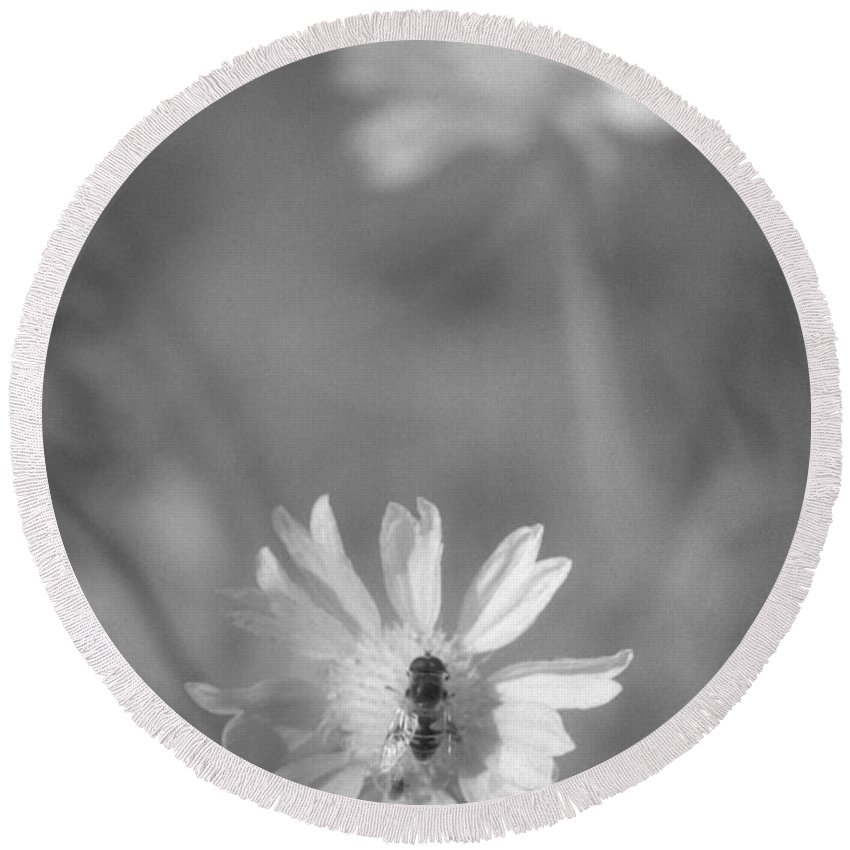 Pollinate Round Beach Towel featuring the photograph Pollination by Richard Rizzo
