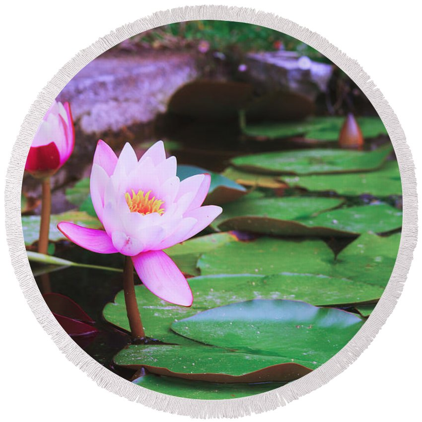 Lotus Round Beach Towel featuring the photograph Pond With Water Lilly Flowers by Anastasy Yarmolovich