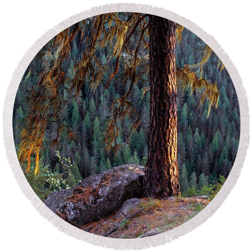 Ponderosa Pine Round Beach Towel featuring the photograph Ponderosa Pine by Leland D Howard
