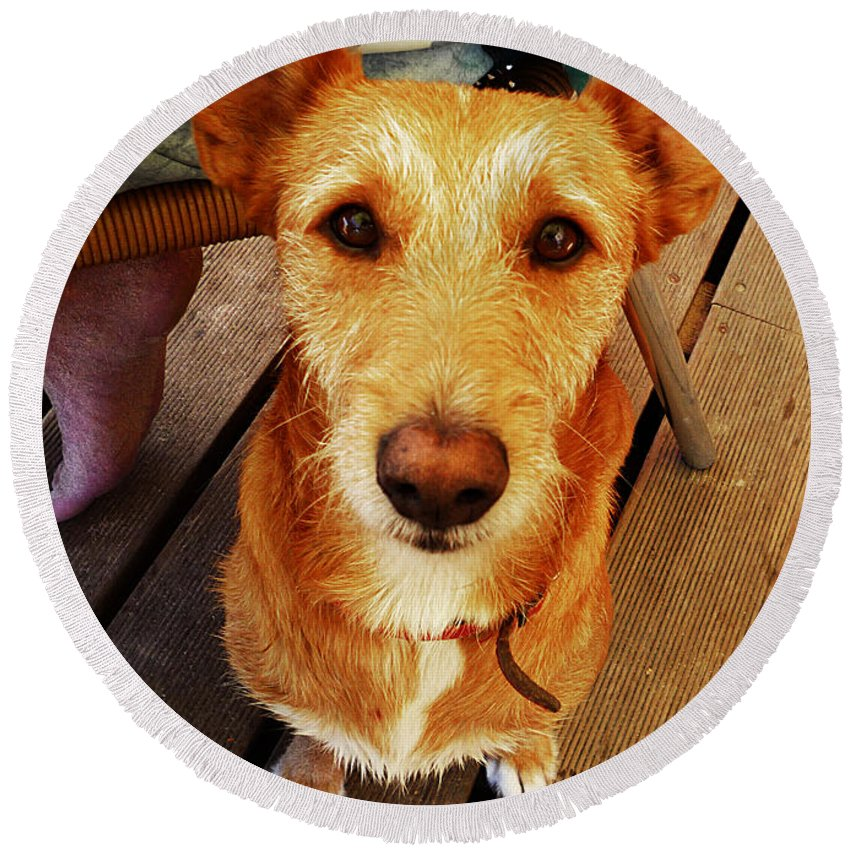 Pooch Round Beach Towel featuring the photograph Pooch by Charles Stuart