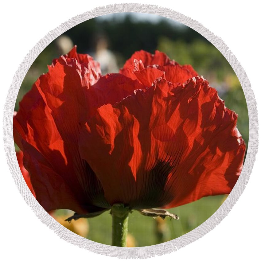 Poppy Round Beach Towel featuring the photograph Poppies 4 by Sara Stevenson