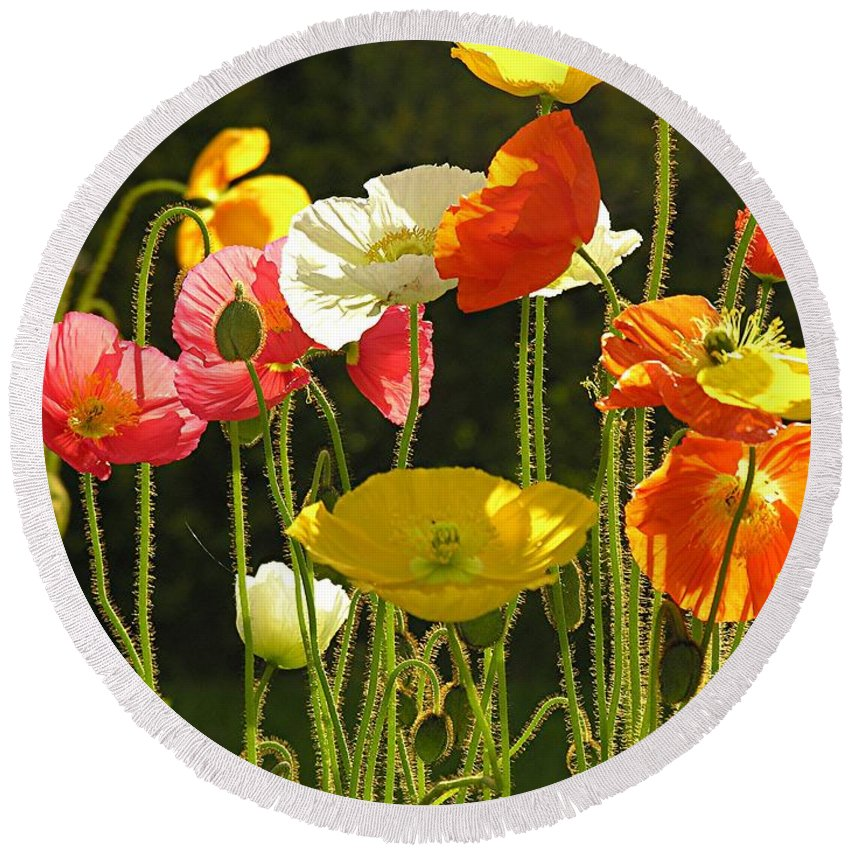 Poppy Round Beach Towel featuring the photograph Poppies by Diane Greco-Lesser