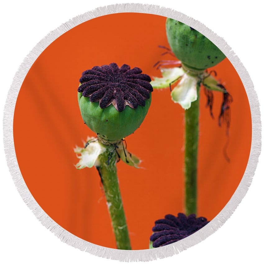 Interior Design Round Beach Towel featuring the photograph Poppies On Orange by Lisa Knechtel