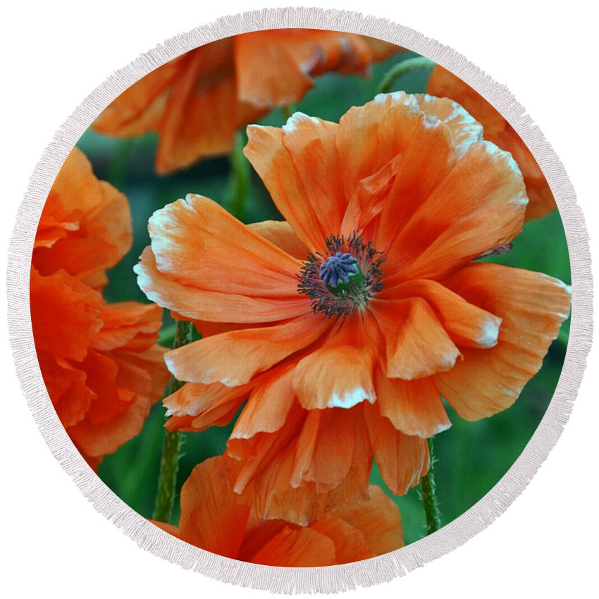 Papaver Somniferum. Opium Round Beach Towel featuring the photograph Poppy Fields by Angelina Tamez