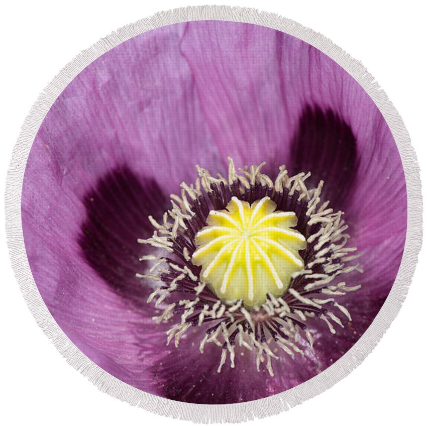 White Round Beach Towel featuring the photograph Poppy Flower Close Up by Michael Moriarty