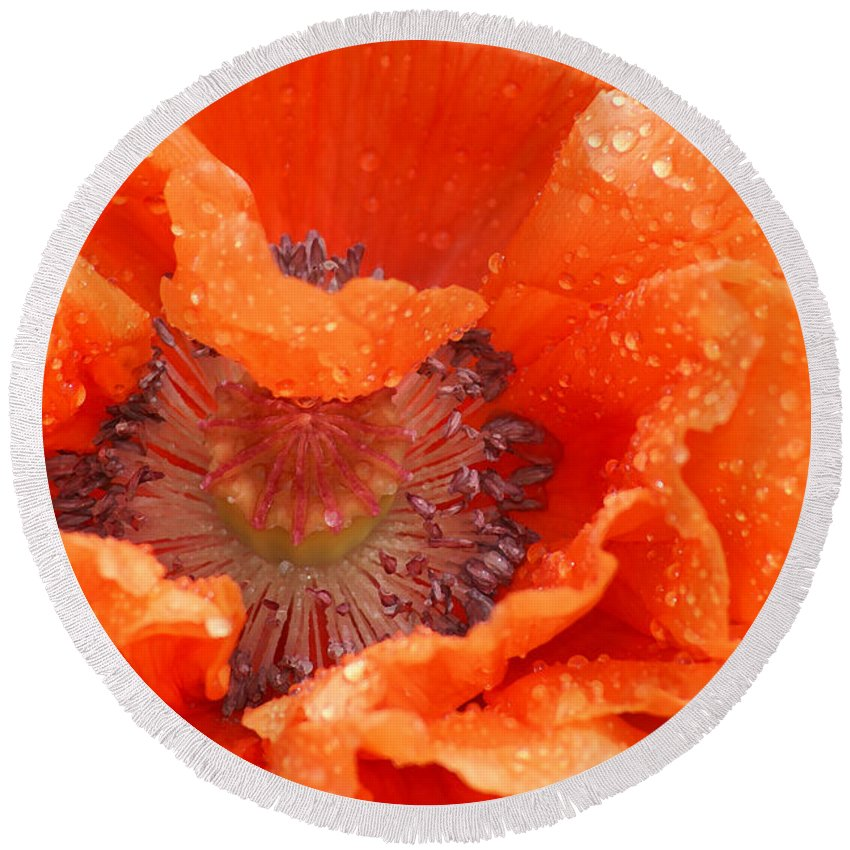Orange Round Beach Towel featuring the photograph Poppy by Heather Coen