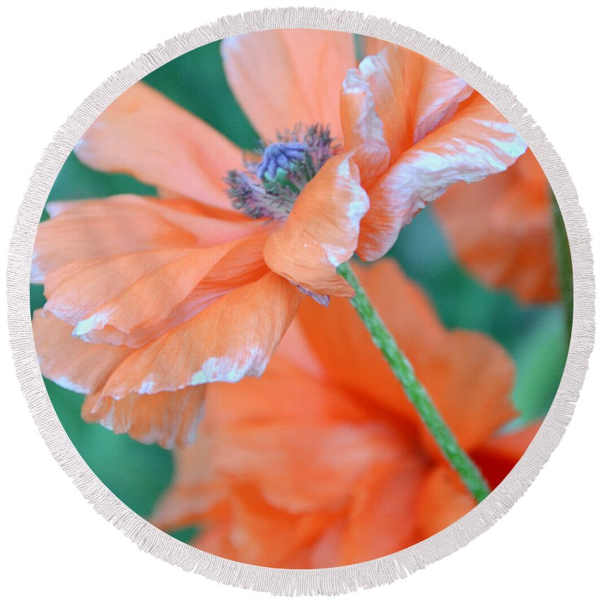 Papaver Somniferum. Opium Round Beach Towel featuring the photograph Poppy Passion by Angelina Vick