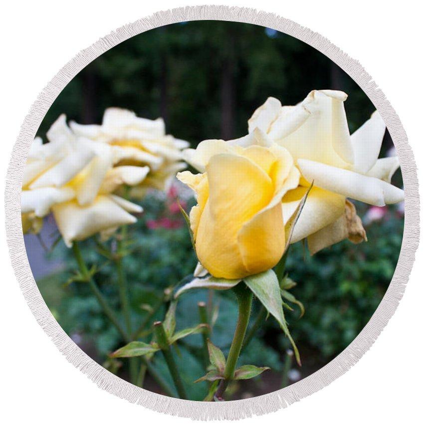 International Rose Test Garden Round Beach Towel featuring the photograph Portland Roses #3 by Robert J Caputo
