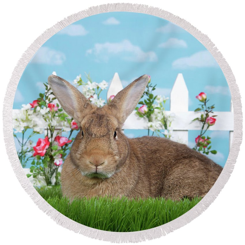 Easter Round Beach Towel featuring the photograph Portrait Of A Gregarious Brown Bunny by Sheila Fitzgerald