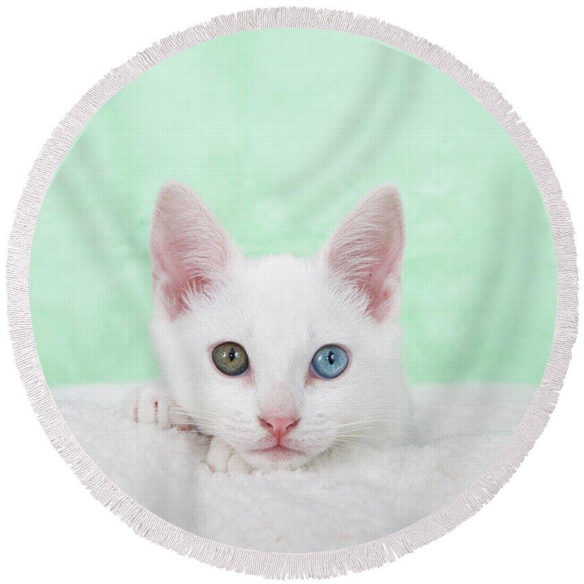 Heterochromia Round Beach Towel featuring the photograph Portrait Of A Heterochromia Eyed Kitten by Sheila Fitzgerald