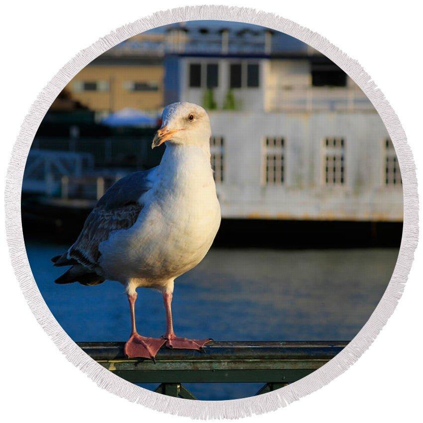 Bonnie Follett Round Beach Towel featuring the photograph Portrait Of A Seagull by Bonnie Follett
