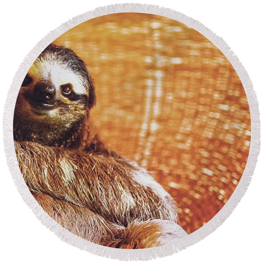 Adult Round Beach Towel featuring the photograph Portrait Of A Sloth Pet Looking In The Camera by Srdjan Kirtic