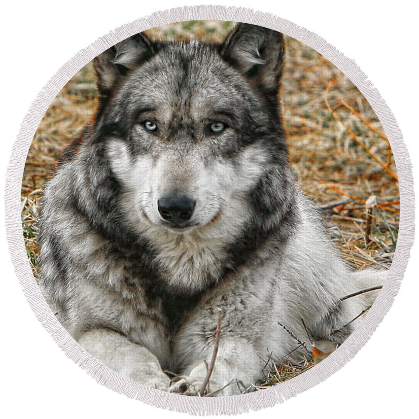 Wolf Round Beach Towel featuring the photograph Portrait Of A Wolf by Shari Jardina