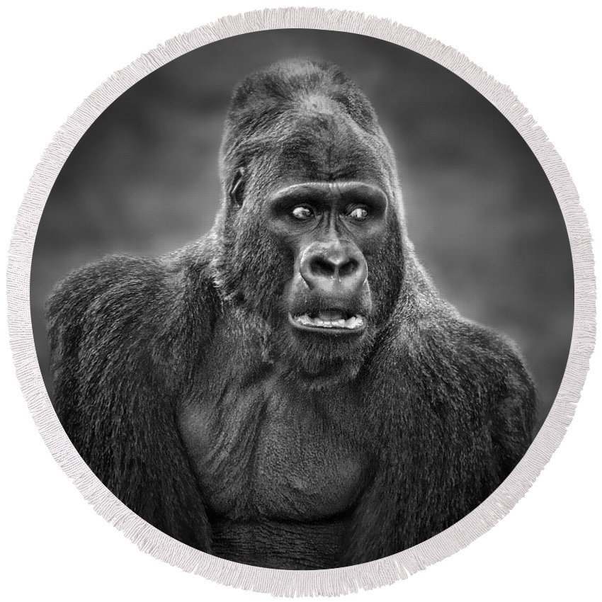 Portrait Of King Kongs Cousin Round Beach Towel featuring the photograph Portrait Of King Kongs Cousin IIi by Jim Fitzpatrick