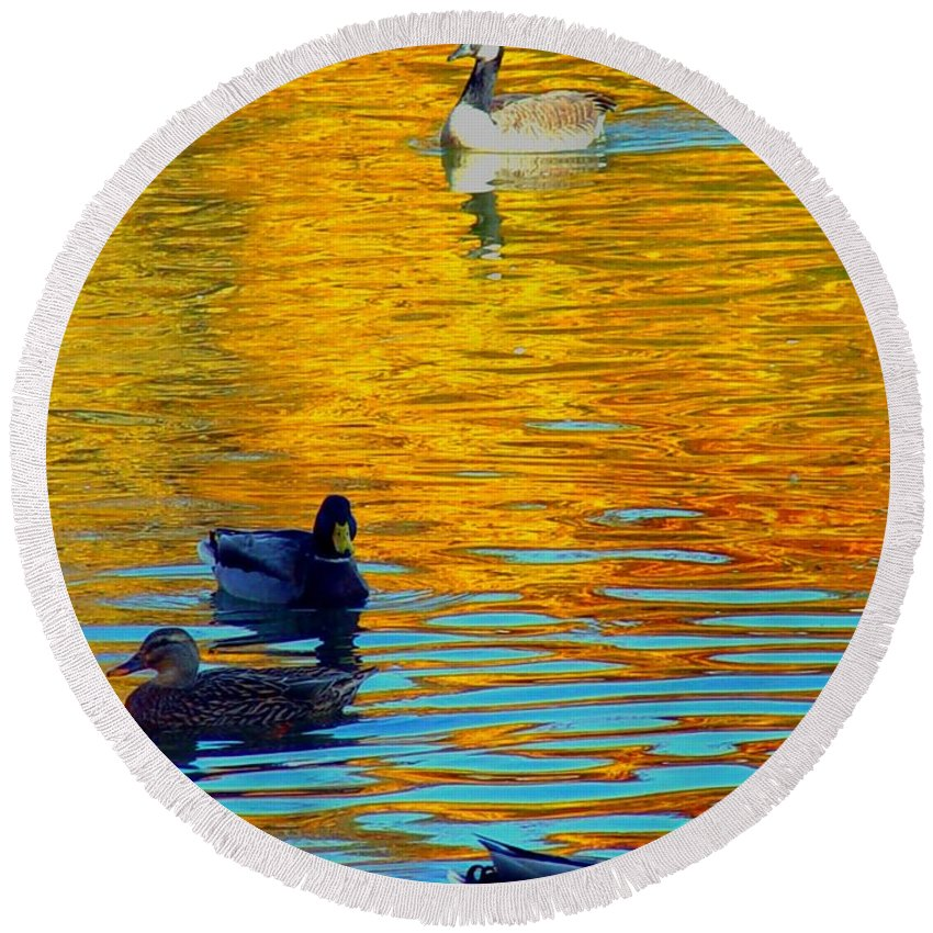 Ducks Malard Lake Gold Canada Geese Blue Round Beach Towel featuring the photograph Possibilities by Jack Diamond