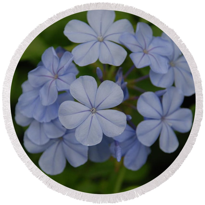 Macro Round Beach Towel featuring the photograph Powder Blue Flowers by Rob Hans