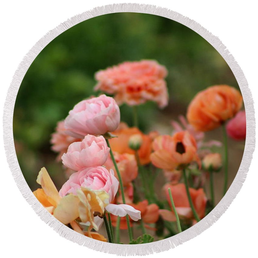 Powder Pink Ranunculus Round Beach Towel featuring the photograph Powder Pink and Salmon Ranunculus by Colleen Cornelius