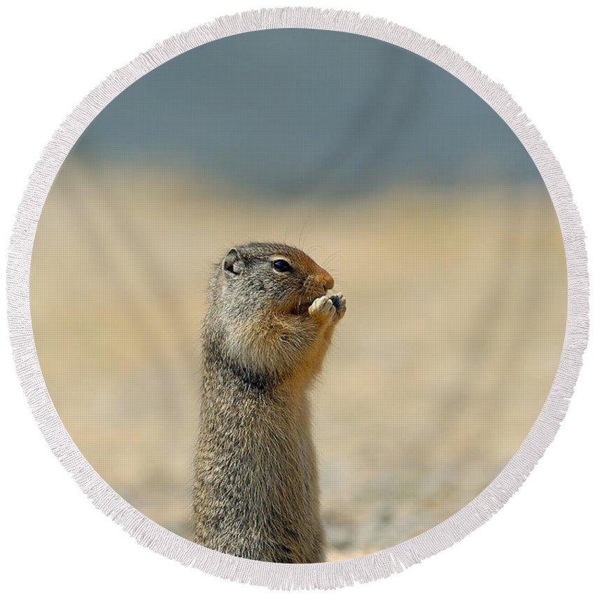 Prairie Dog Round Beach Towel featuring the photograph Prairie Dog by Sebastian Musial