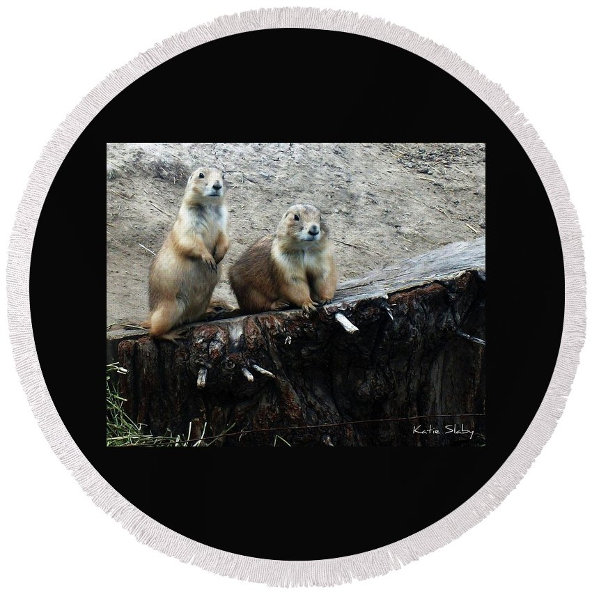 Prairie Dogs Round Beach Towel featuring the photograph Prairie Dogs by Katie Slaby