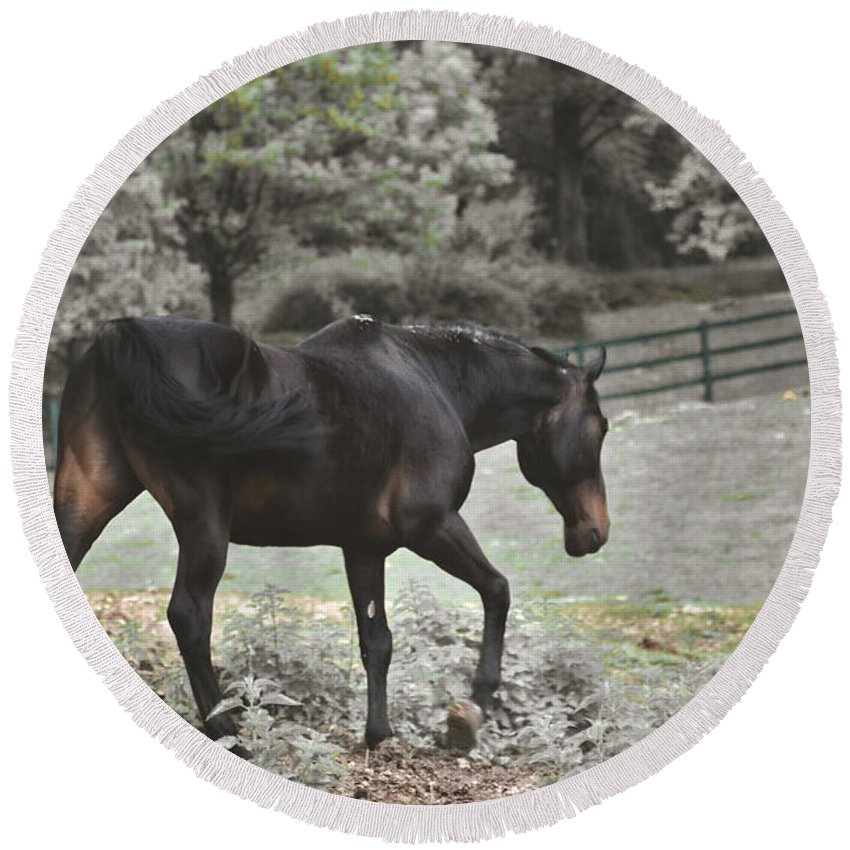 Horse Round Beach Towel featuring the photograph Prancing by Photos By Zulma