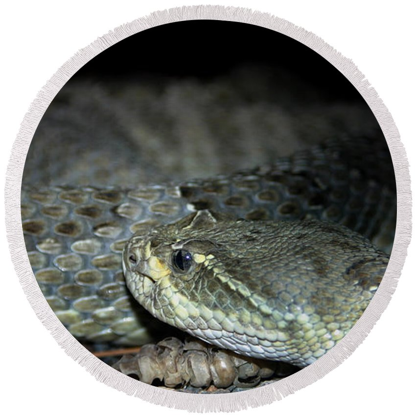 Snake Round Beach Towel featuring the photograph Prarie Rattle Snake by Anthony Jones