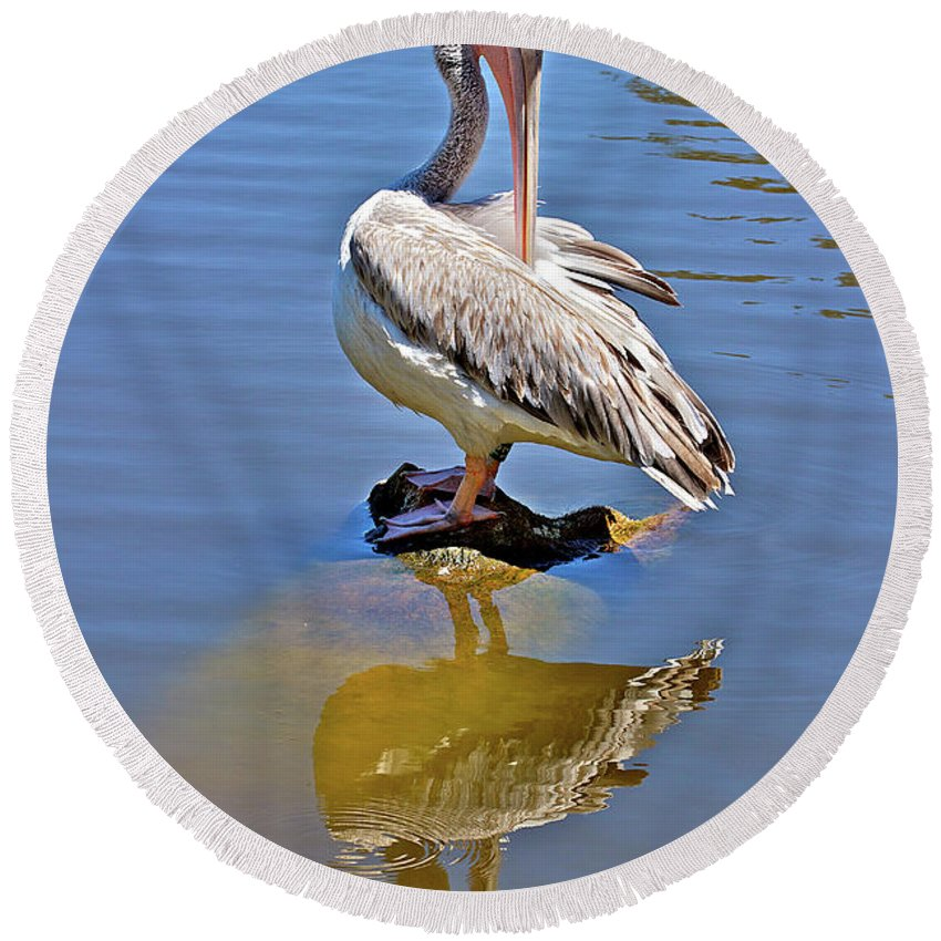 Pelican Round Beach Towel featuring the photograph Preening Pelican by Phyllis Denton
